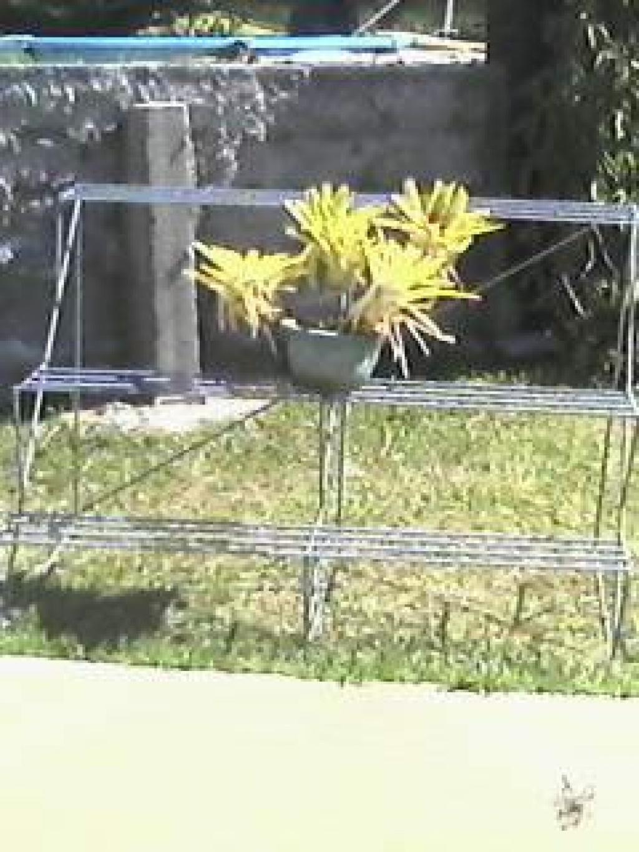 Accessoires jardin petites annonces tahiti infos les for Accessoires de jardin