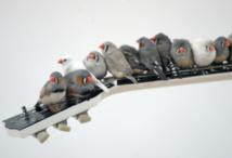 """""""Il fait chaud dehors, bébé"""" : pourquoi des oiseaux chantent à leurs oeufs"""
