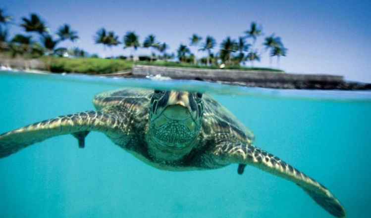 Le plus grand congrès sur la protection de la nature s'ouvre jeudi à Hawaii