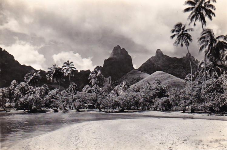 Cocotiers au bord de l'eau