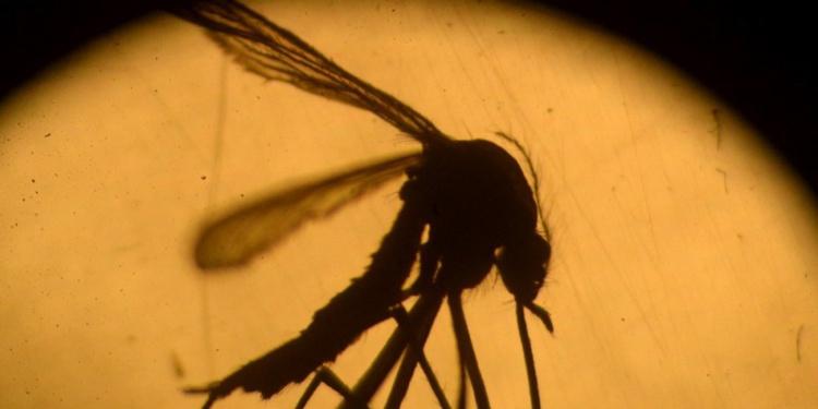 Santé : 49 nouveaux cas de dengue en une semaine