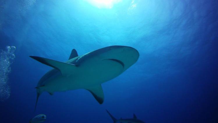 Entre requins et m duses deux plongeurs ont d riv 48 for Dans 48 heures