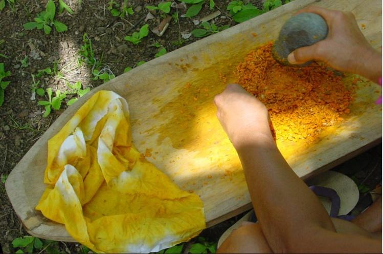 Teinture jaune obtenue avec des racines de nono
