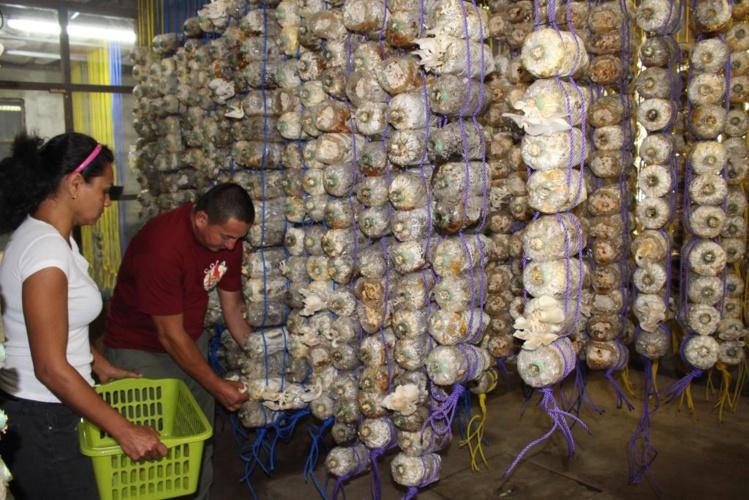 Une douzaine de variétés de champignons promise avant la fin de l'année