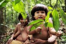 Garantir leurs terres aux indigènes d'Amazonie est source de richesse (étude)