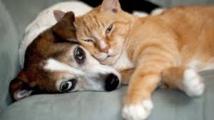 Le chien et le chat... mieux que des amis pour les Français
