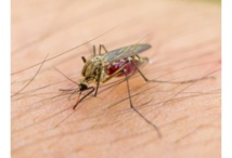 L'OMS craint une propagation du virus Zika en Asie-Pacifique