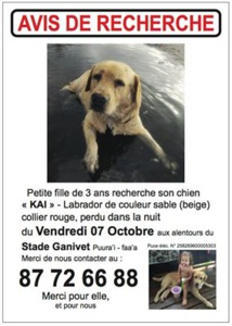 Disparition du labrador Kai : la commune de Faa'a porte plainte