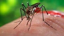 USA: un deuxième foyer autochtone de Zika identifié à Miami