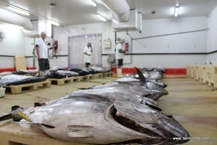 A la criée, le prix du poisson redescend