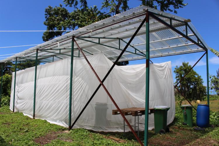 Technival élève des mouches à Paea