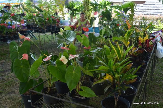Plusieurs variétés de fleurs sont exposées : orchidées, torches noires, anthurium, porte-bonheurs…