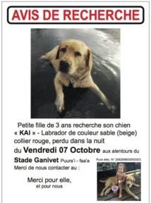 L'annonce à la recherche du chien Kai. Quand il l'a publié, le propriétaire ignorait que son compagnon avait été volé depuis déjà trois jours.