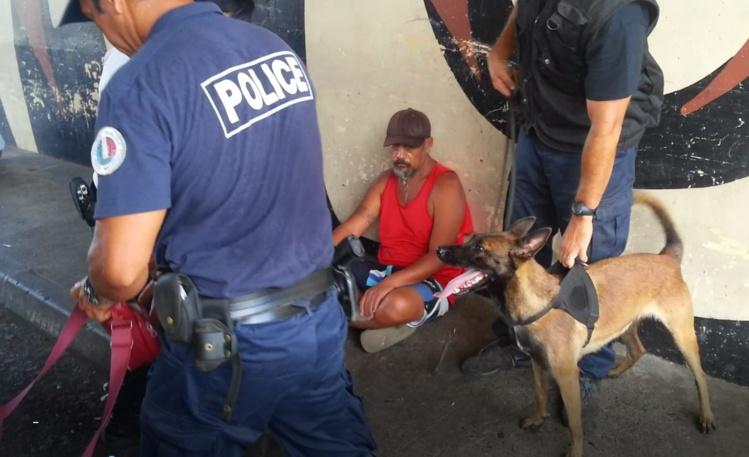 Gipsy, le chien de la brigade canine de la DSP spécialisé dans la recherche de produits stupéfiants.