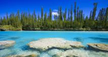 La biodiversité de Nouvelle-Calédonie passée au peigne fin par des naturalistes