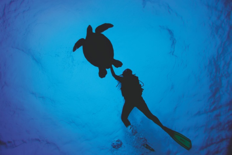 Les plongeurs sous-marins trouveront leur bonheur aux îles Cook. Quant aux amateurs de baleines, de juillet à novembre, ils se régalent chaque année !