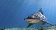 Un homme attaqué par un requin à Takapoto