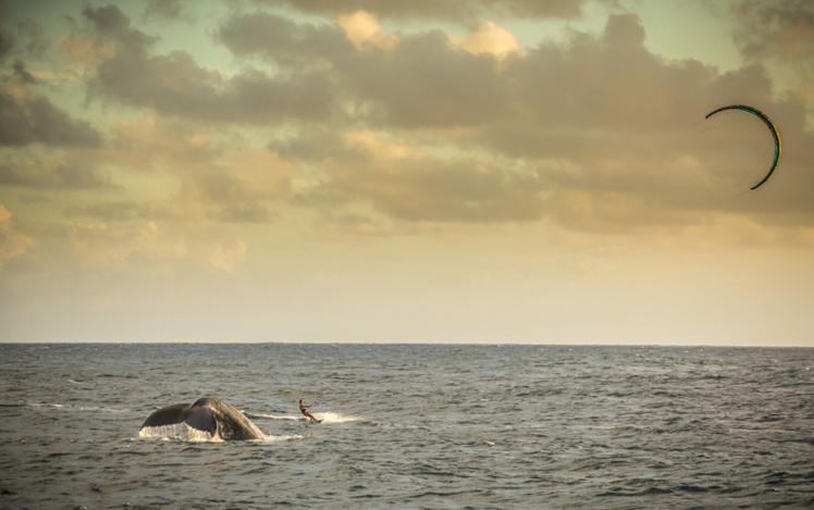 Magnifique ballet de kitesurf face à une baleine qui croise dans les eaux polynésiennes…