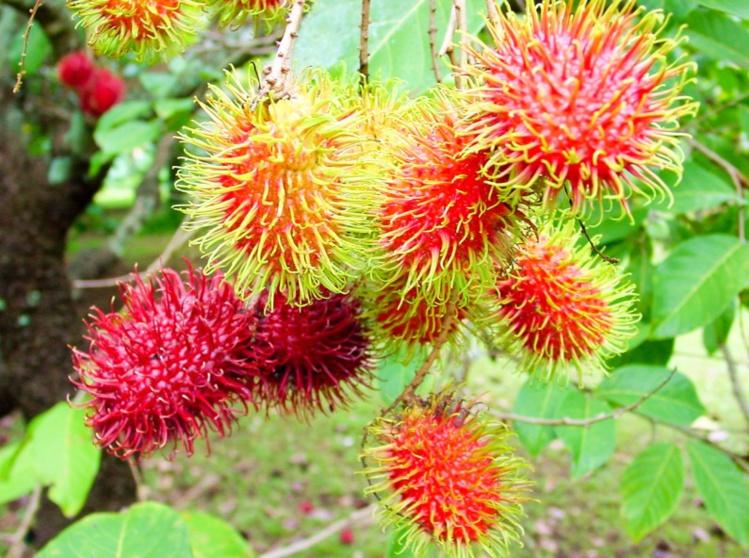 Un petit tour au jardin botanique de Papeari