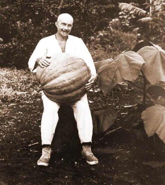 Harrison Smith et une citrouille géante. Photo Coll. Musée Norman Hall