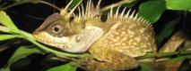 """Un serpent arc-en-ciel et un lézard dragon, """"nouvelles"""" espèces de la région du Grand Mékong"""