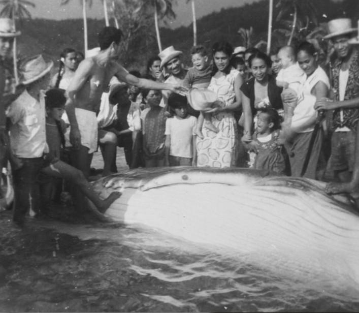 Partage de la baleine à Rurutu dans les années 50