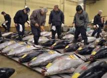 Japon: un thon rouge à 605.000 euros à la 1ère criée 2017