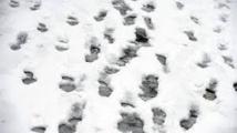 Besançon: la police retrouve les voleurs grâce à leurs pas dans la neige