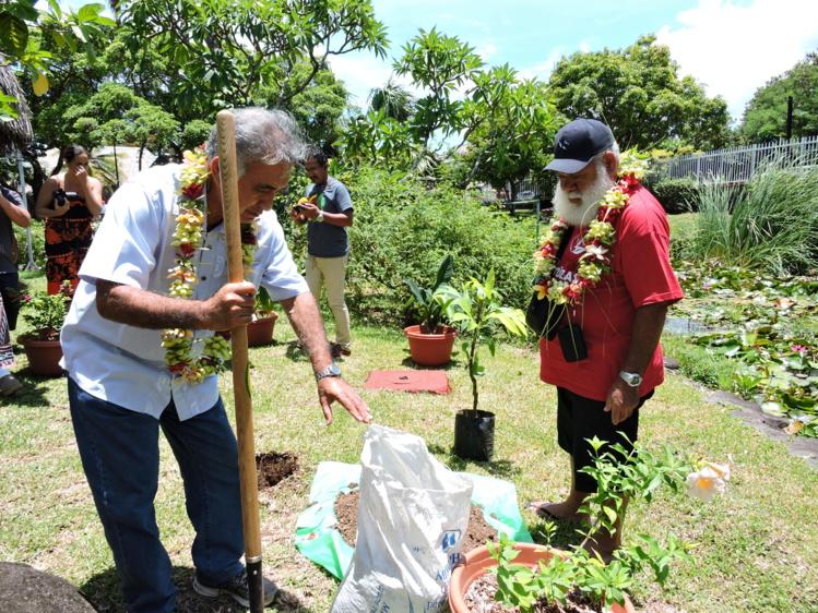 Les deux élus ont planté un pied de 'uru dans les jardins de la mairie de Faa'a.