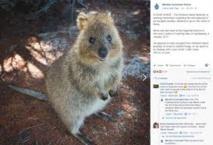 La police australienne recherche Steve, marsupial en cavale