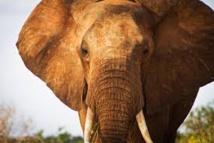Interpol renforce sa lutte contre le trafic d'animaux sauvages