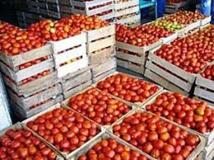 Des chercheurs veulent redonner du goût aux tomates industrielles