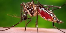 Zika : une seul dose d'un nouveau vaccin protège des animaux (étude)