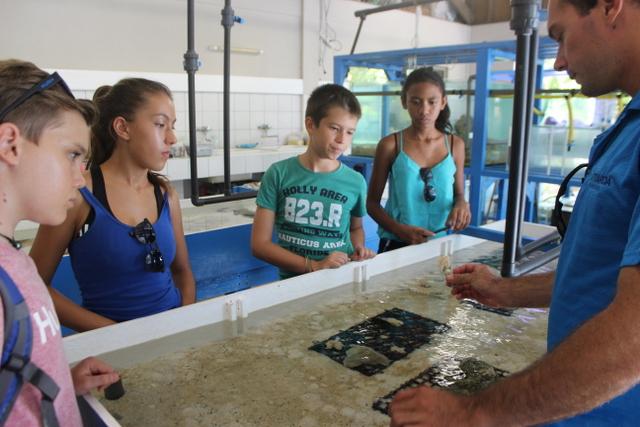 Le processus de bouturage des coraux n'a plus de secret pour ces élèves.