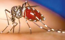 Troisième mort de la dengue en Nouvelle-Calédonie en moins d'un mois