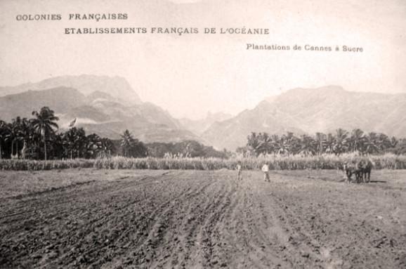 Plantations de cannes à sucre dans la plaine côtière de Pirae vers 1900.