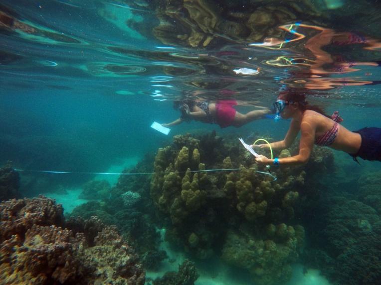 18 étudiants certifiés au suivi des récifs coralliens