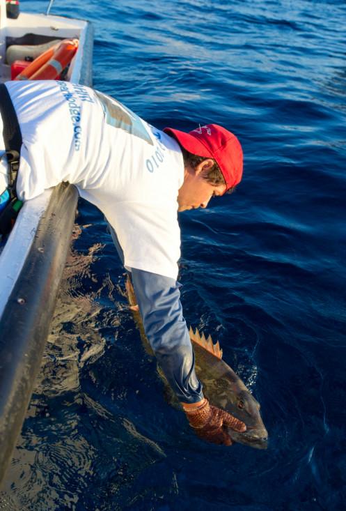 """Quand on a pris assez de poissons, on applique la règle du """"no kill"""" ; les prises sont remises à l'eau."""