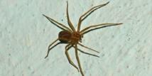 Une étude révèle l'appétit vorace des araignées