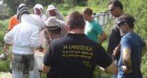 Apis Porinetia, un collectif d'apiculteurs pour protéger et structurer la filière sur le fenua