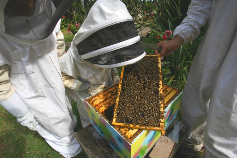 Nez à nez avec des centaines d'abeilles, sans avoir peur de se faire piquer !
