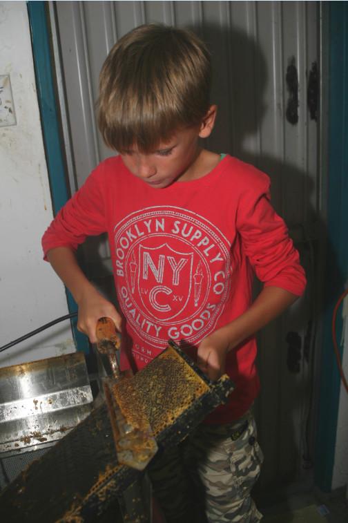 Avant de passer les cadres lourds de miel dans une centrifugeuse, il faut délicatement ouvrir chaque loge.