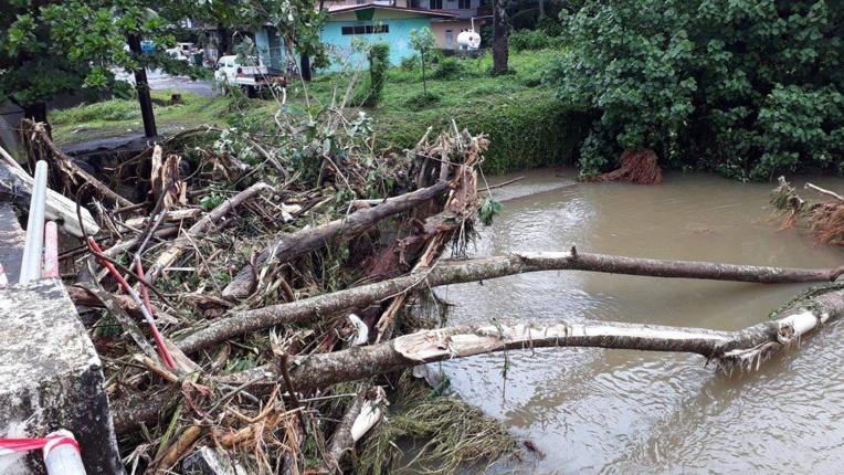 Des arbres se sont retrouvés coincés sous le pont de Mahateaho à Hitiaa. (crédit photo : Raihoa)