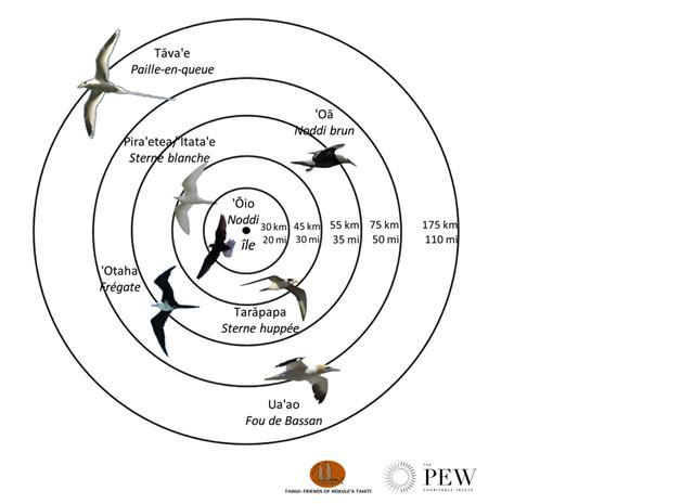 Carte du rayon d'action des oiseaux avec les distances maximales parcourues par chaque espèces (Crédit : Tainui Friends of Hokule'a en partenariat avec Pew Polynésie)