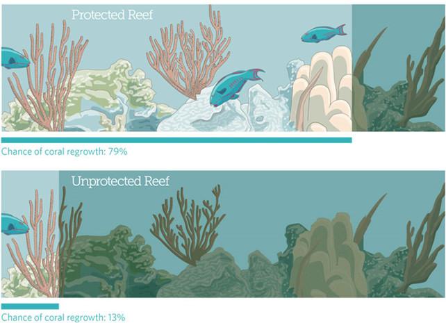 Les coraux ont six fois plus de chances de se régénérer suite à une agression quand ils sont protégés par des réserves marines (Crédit : Pew sur la base d'une étude de Mumby et al. 2013)