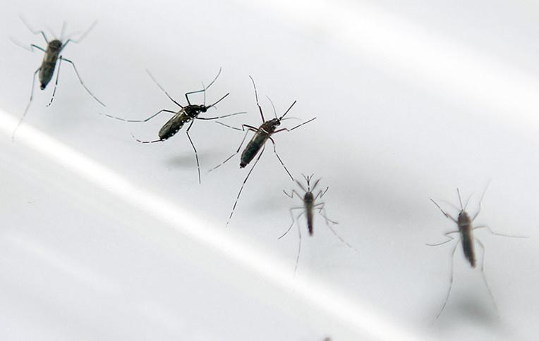 Le bilan de la dengue s'alourdit à sept morts en Nouvelle-Calédonie
