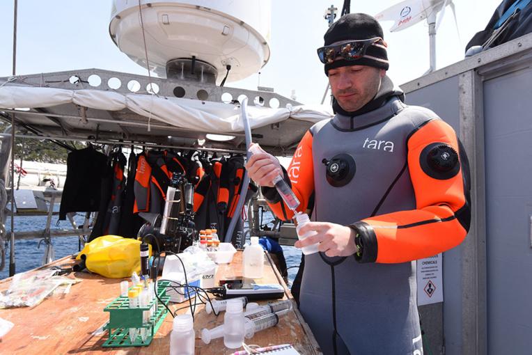 Contre la mort des coraux, un espoir dans des îles du Japon