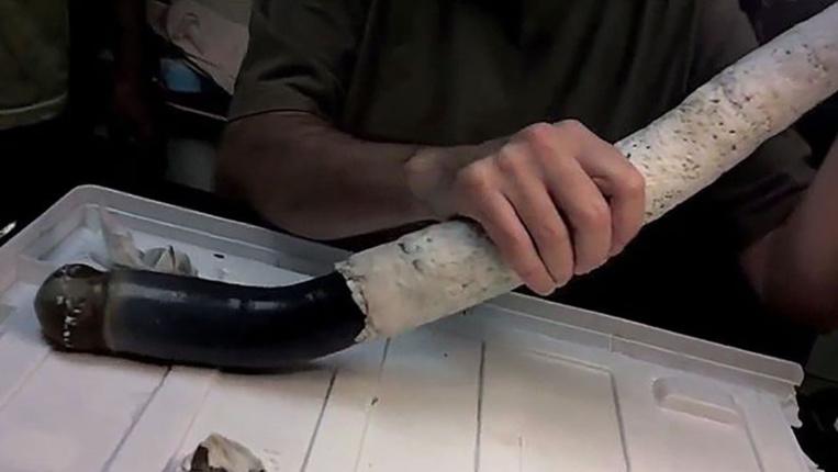 Un étrange mollusque marin mis au jour aux Philippines