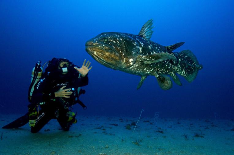 Fasciné par les loches marbrées de Fakarava, le photographe sous-marin professionnel animera jeudi une conférence sur ce sujet, qui a fait l'objet aussi d'un magnifique documentaire.