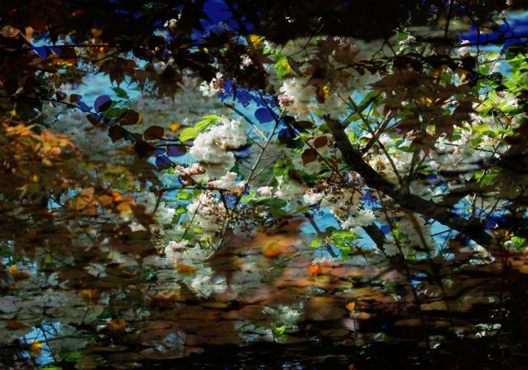 """Ces photographies sont tirées de la série """"Saison 5"""", commandée pour une grande exposition au Nexus Hall de Ginza, à Tokyo."""